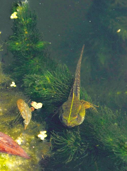 我们看着小蝌蚪在池塘里长成了青蛙.-荷塘深处是我家