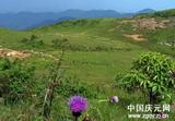 双苗尖风光――高山草甸