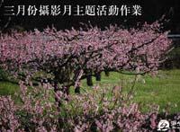 2010年3月份摄影月主题活动,《春天的小品》