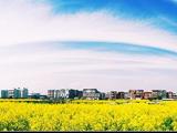 美丽乡村――上杨