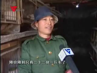 [12月13日] 许国强:养兔能致富