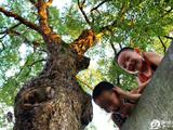 大树下的童年