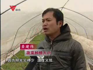[01月05日] 冰雪不断 育苗受阻蔬菜遭殃