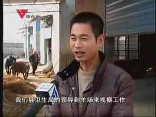 [01月30日] 羊儿吃中药 体健价更高