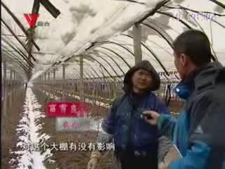 [02月19日] 春雪来袭 果蔬大棚忙除雪