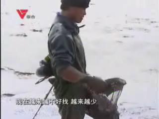 """[03月13日] 山里人海边""""淘金"""" 海瓜子物以稀为贵"""