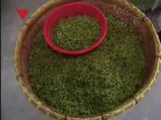 [03月14日] 机器炒茶效率高 人工上涨茶价高