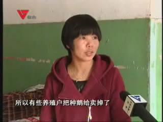 [03月18日] 网上卖苗禽 老行业新气象