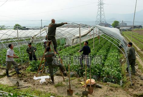 剑池街道宏山村草莓园搭建钢架大棚
