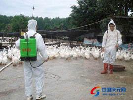 荷地镇开展夏季动物疫病消毒灭源行动