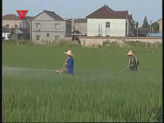 [07月30日] 高温天防虫害 农户忙施药