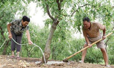 枣农节水灌溉 抗旱保收