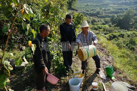 安民村农户在补施肥料