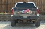 美卡车逼真贴画似绑架引来警察