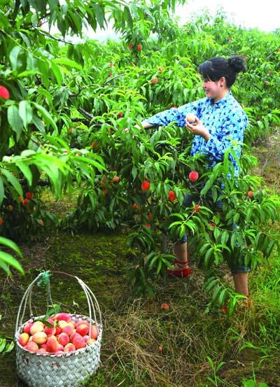 农业节庆活动_旅游突出特色东泉镇以节庆活动促农业发展