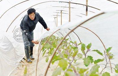 我市做好大棚蔬菜防冻工作