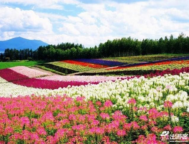 六,台湾大溪花海农场图片