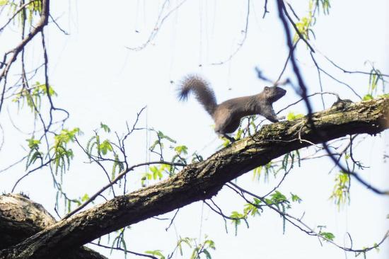 婺州公园松鼠越来越多图片