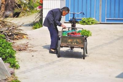 小猪吃人奶视频_是正宗的吃青饲料的土生土长的猪,但是收购猪的人说只能按普通的饲料