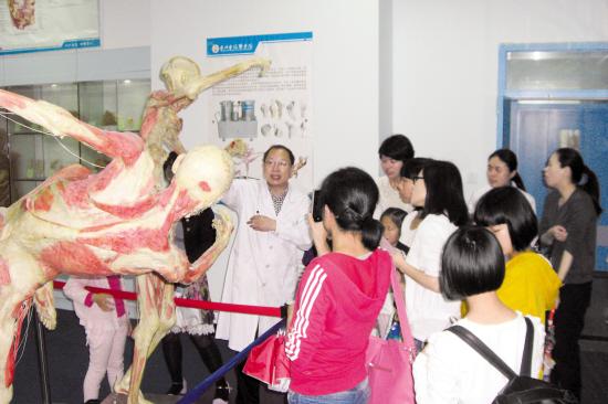 人体 台州学院/昨天,台州学院人体科学馆人体标本展对外开放,吸引了众多市民...