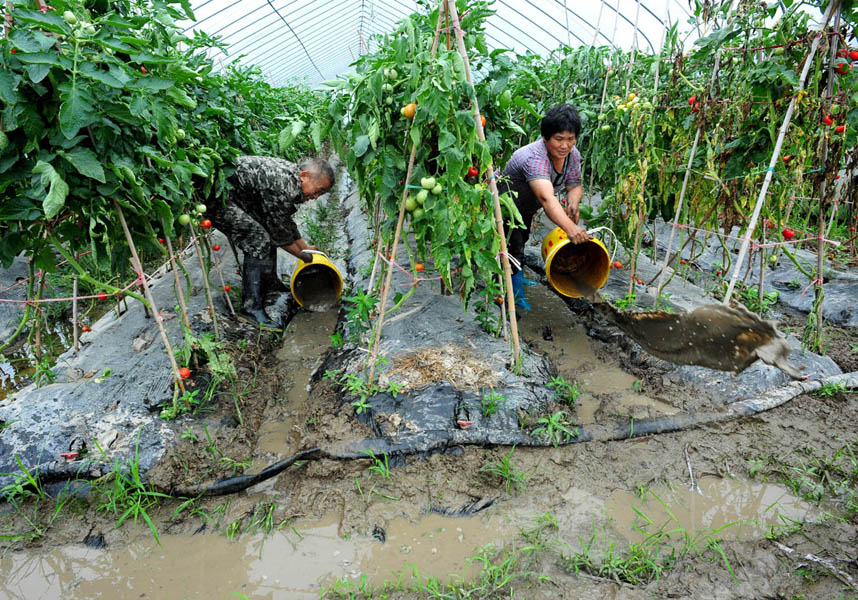 洪水刚消退 农民忙自救--武义新闻网