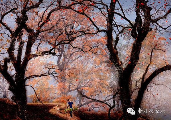 古道、山泉、老树、飞鸟――东坪村的田园时光