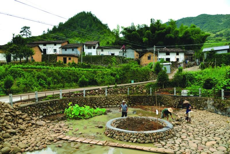 岭洋乡鱼山村改造村中水塘