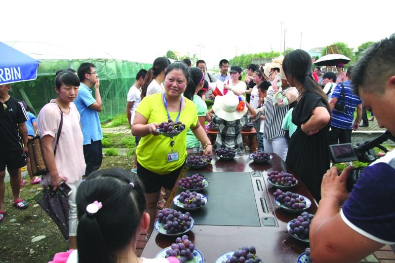 放心葡萄供游客们品尝