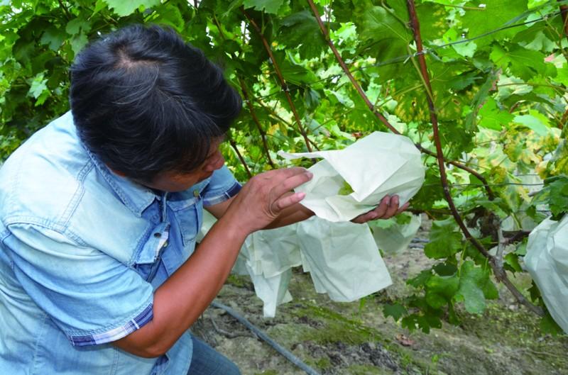 标准化生产催生安全放心农产品―――奋力打造全国农产品质量安全放心区主题报道之一