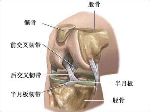 膝关节解剖结构.图片来源:解剖图谱-娜 时代结束 都是膝损伤惹的祸