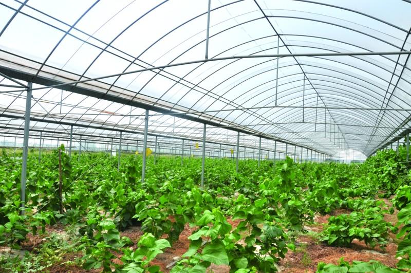 放心田园放飞梦想―――奋力打造全国农产品质量安全放心区主题报道之五