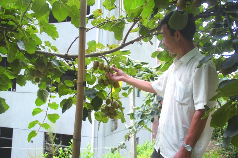 依托绿色拓市场――一问原生态农产品缘何这么有活力