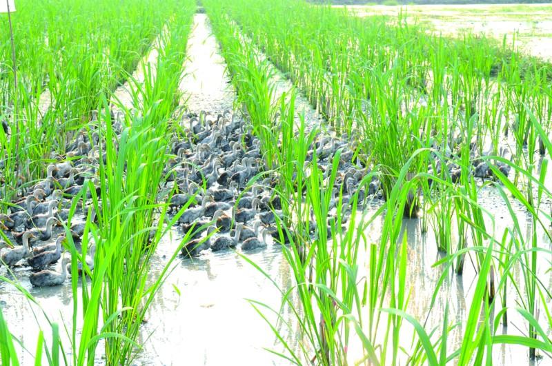 引领绿色新发展―――二问农民缘何钟情循环经济
