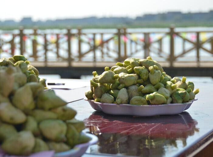 南湖菱文化节