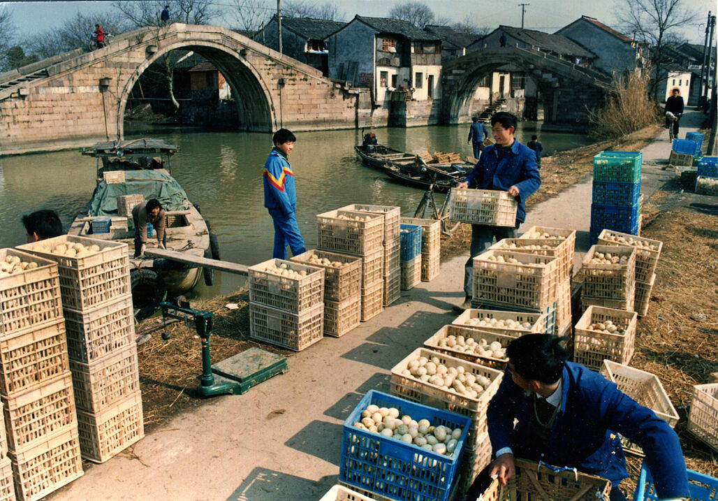 乌镇西高桥当年曾经是禽蛋收购市场