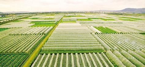农业经济篇之一:现代农业新典范