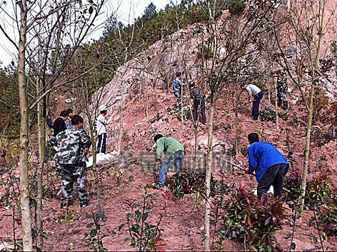 安仁镇林业站工作人员进行绿化