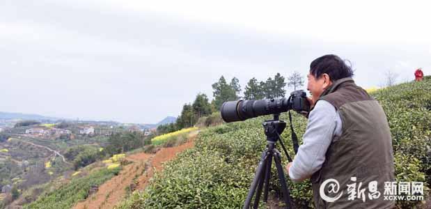 东茗乡茶乡风情摄影创作基地掠影