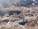 和谐号列车穿越居庸关花海 被赞开往春天的列车