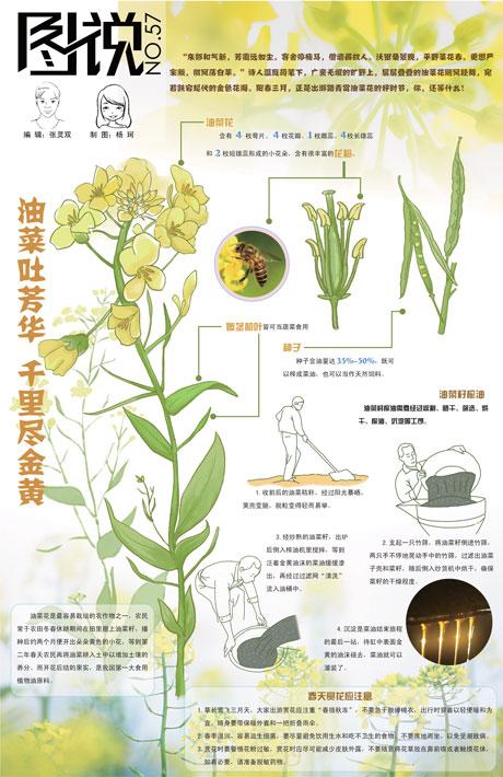 【第57期】油菜吐芳华 千里尽金黄