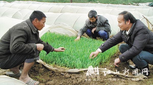 农技人员现场解决技术问题