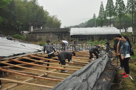 八都镇集中力量拆除公路沿线菇棚