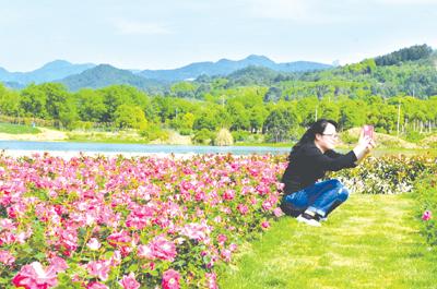 澧浦绿道频道花开--金华初中月季有南京多少图片