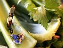 美国艺术家用蔬菜打造微型景观 惟妙惟肖