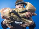 巨蟹现身英吉利海峡 双螯可夹碎人手腕我要评论