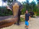 泰国大象用鼻子操作相机 和游客玩自拍