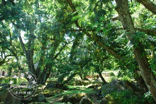 古香榧群保护规定下月起实施