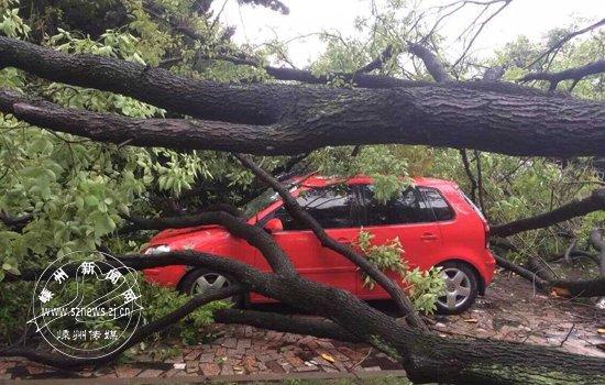 受课程v课程大树轰然倒下暴雨躺着中枪2011初中生物版小车标准图片