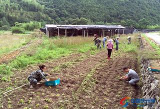 张村乡干部下村实践种花送绿