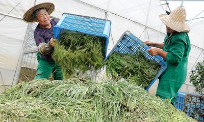 生态农业园被泡三天三夜 1500多亩果蔬受损